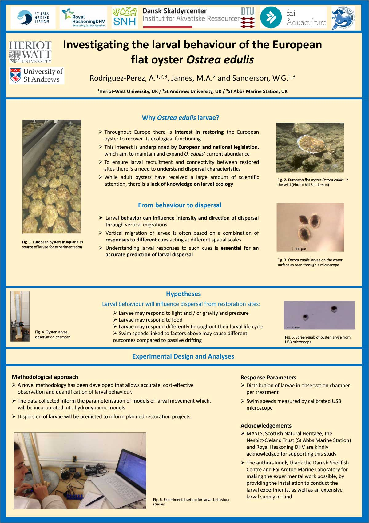 Poster Investigating the larval behaviour of European flat oyster Ostrea edulis