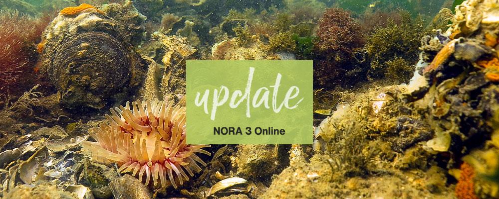 NORA 3 Online